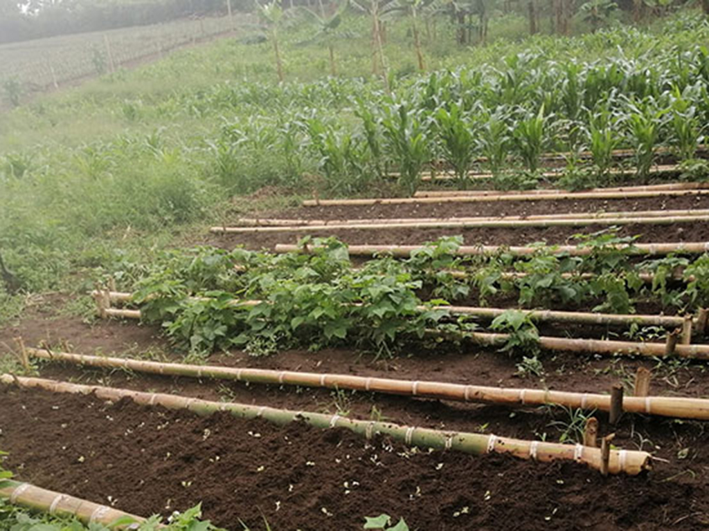 Huertas barriales, el camino para la autonomía alimentaria