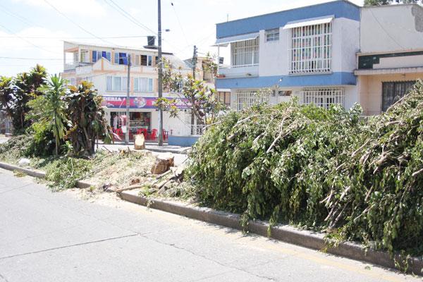 En Las Américas los árboles pierden vida