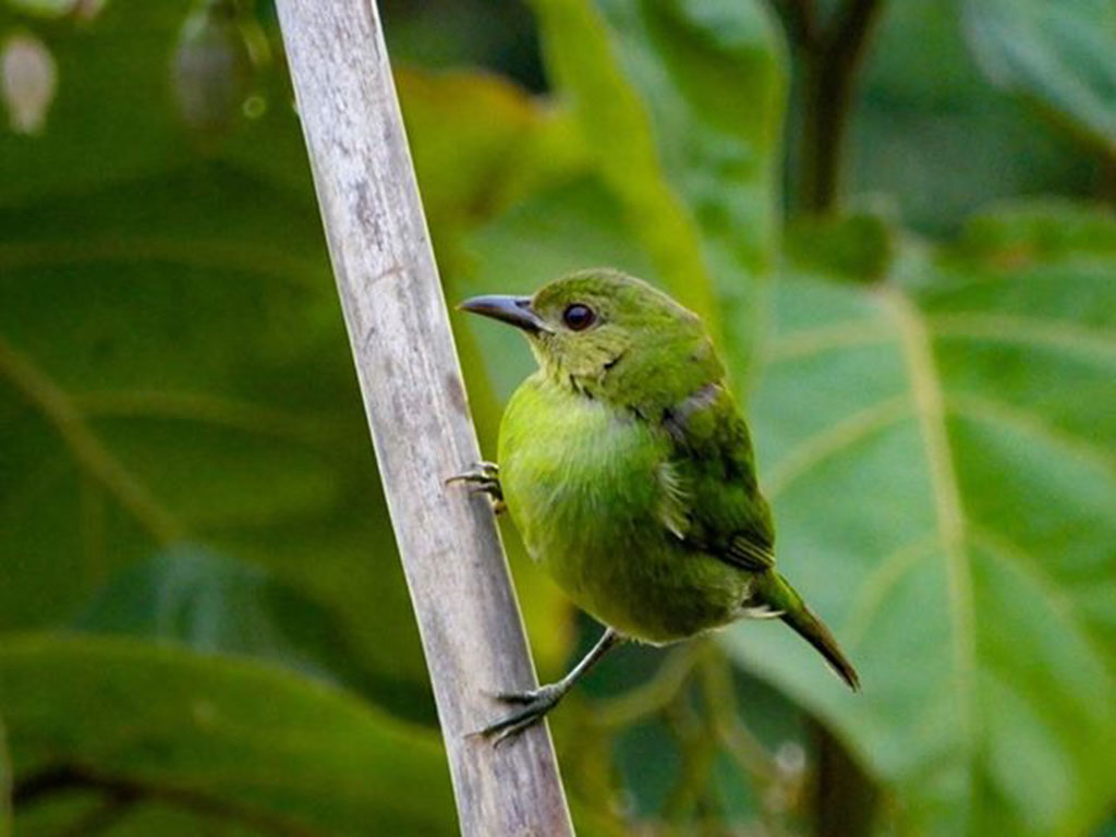 Las aves que habitan en el Quindío captadas en el lente de nuestros lectores