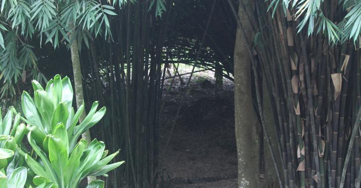 Disfrute del parque El Paraíso del Bambú y la Guadua en el Quindío