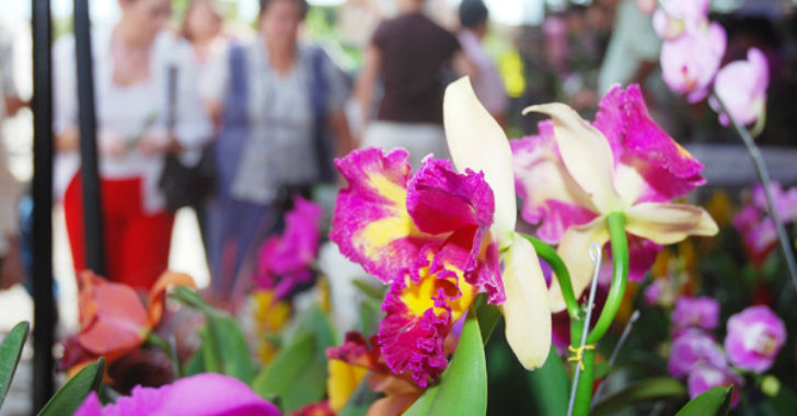 Asista al Festival Orquídeas, Café y Arte en Manizales