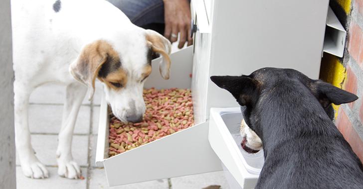 Comedog, mucho más que un comedor para perros callejeros