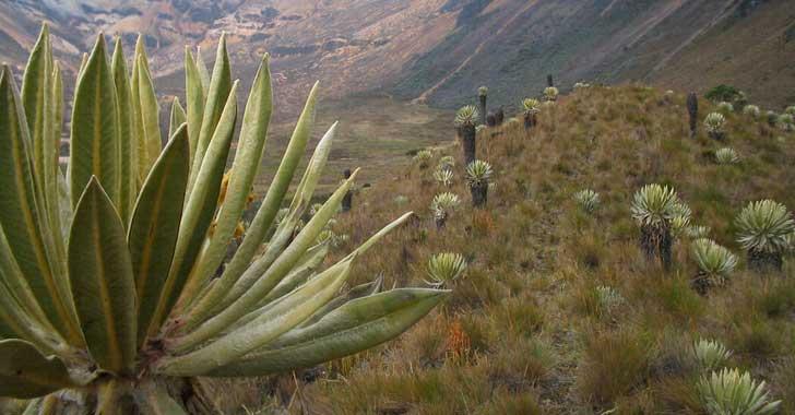 El páramo de Chilí, nueva área protegida en el Quindío