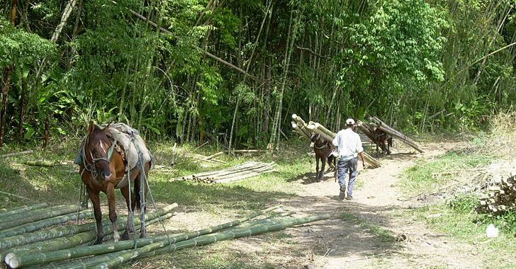 Lucha contra fenómeno de 'El Niño': CRQ alerta sobre tala de guaduales