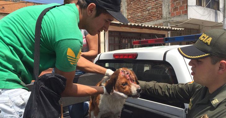 Policía de La Tebaida atendió perros callejeros