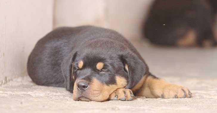 """""""Pólizas para perros peligrosos están sin establecer"""": Fasecolda"""