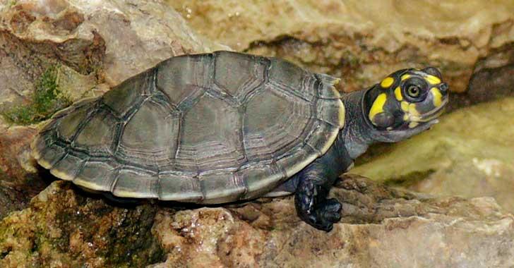 Capturados traficantes que llevaban cerca de 5.000 tortugas en peligro de extinción