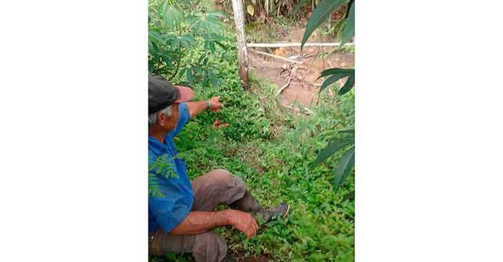 Ubican cadáver en avanzado estado de descomposición en zona rural de Calarcá
