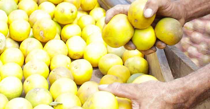 Este sábado es el mercado campesino en Calarcá