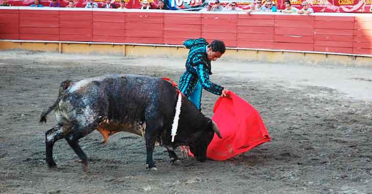Proyecto de ley para abolir corridas de toros fue aprobado en Cámara