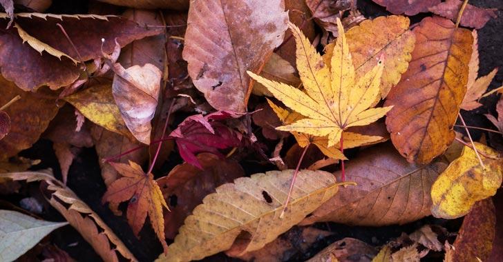 Descubren que las hojas en descomposición producen gases de efecto invernadero