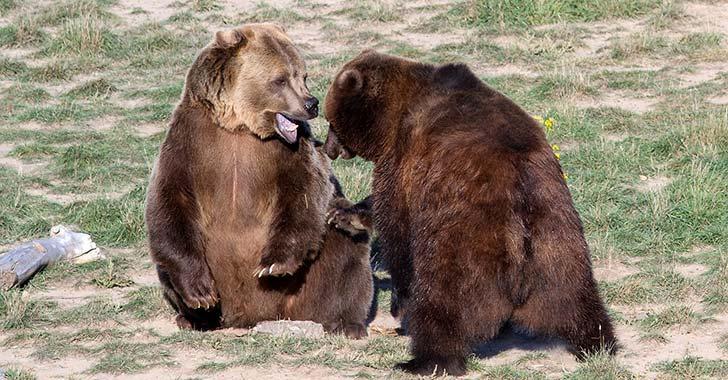 EE.UU. saca a oso grizzly de Yellowstone de lista de especies amenazadas
