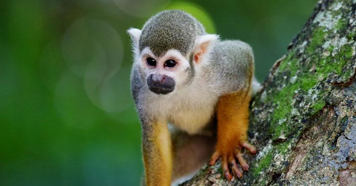 Fragmentación del hábitat aumenta el riesgo de extinción de los mamíferos