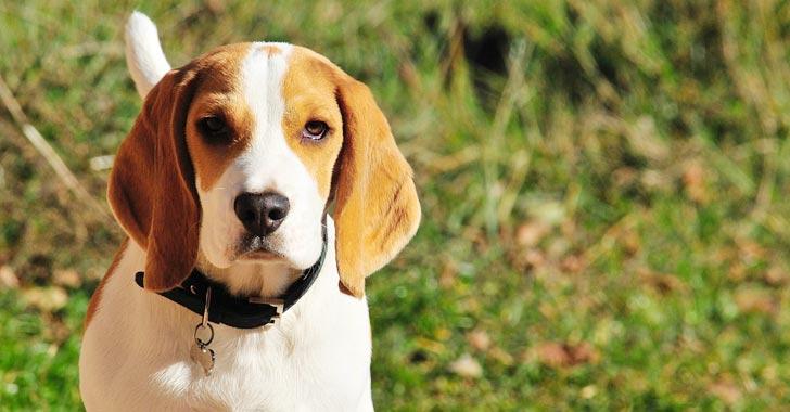 Científicos crían primer perro clonado con edición genética