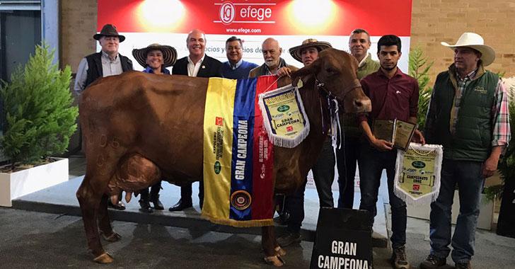 Ganaderos quindianos, con 10 premios en primeros días de Agroexpo