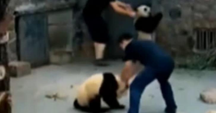 Un vídeo con presuntos maltratos a pandas en reserva natural de China desata polémica