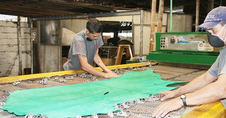 Curtiembres de La María  avanzan en formación para  producir cueros de alta gama