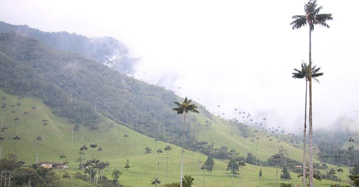 $1.000 millones se han invertido en la restauración del Corredor Biológico del Árbol Nacional