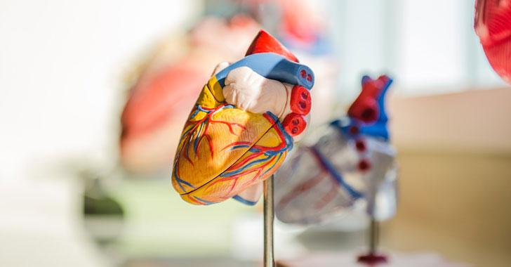 Investigadores descubren por qué tenemos el corazón a la izquierda
