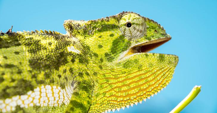 """Colombia tiene 11 especies de reptiles en """"peligro crítico"""" de extinción"""