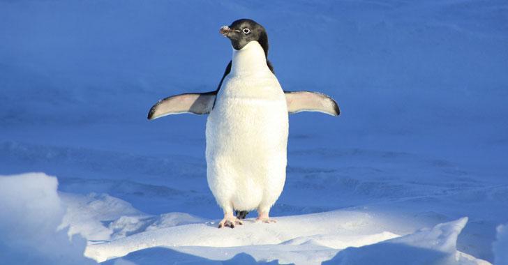 WWF pide crear área protegida en la Antártida tras muerte masiva de pingüinos