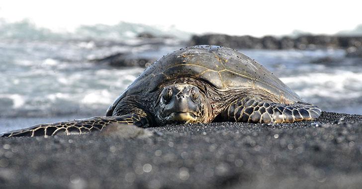 Localizan centenares de tortugas marinas muertas en las costas de El Salvador