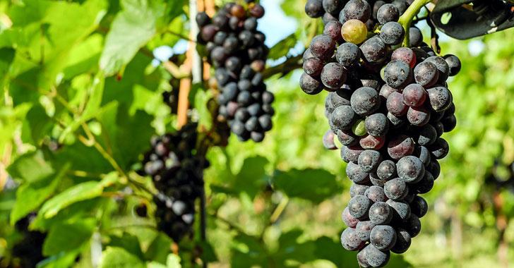 Arqueólogos descubren evidencias de la producción de vino hace 8.000 años