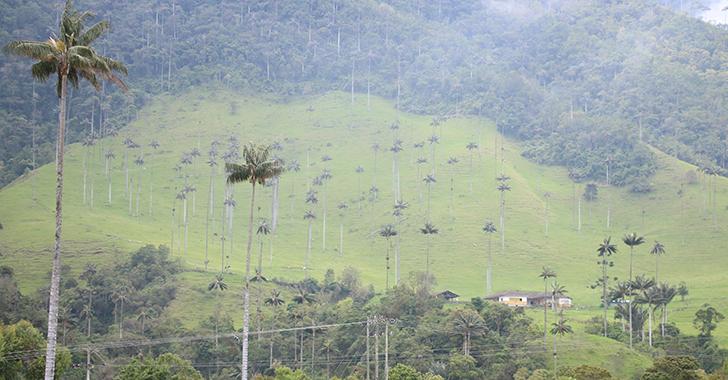 28% del área de Salento está amenazada por la minería