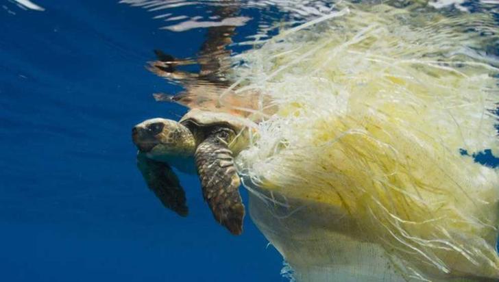 Cientos de tortugas marinas están muriendo por la basura en el océano