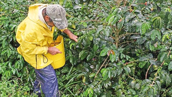 Plenaria de la Cámara aprobó proyecto de seguridad social del sector agropecuario