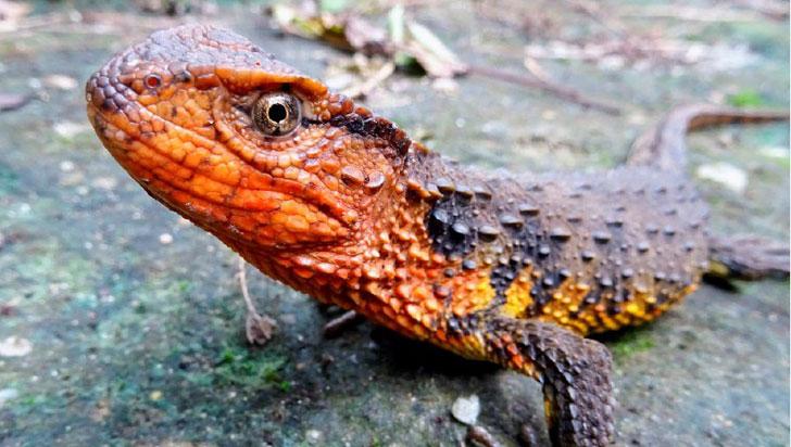 Tras explorarse el sur de Asia, se descubrieron 115 nuevas especies