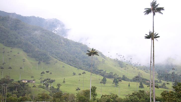 Bosque de Palmas de Cera será un área protegida en 2018