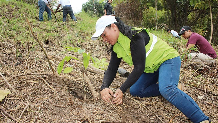 Por proyecto electrovegetal 228 rboles nativos del for Arboles nativos de colombia jardin botanico