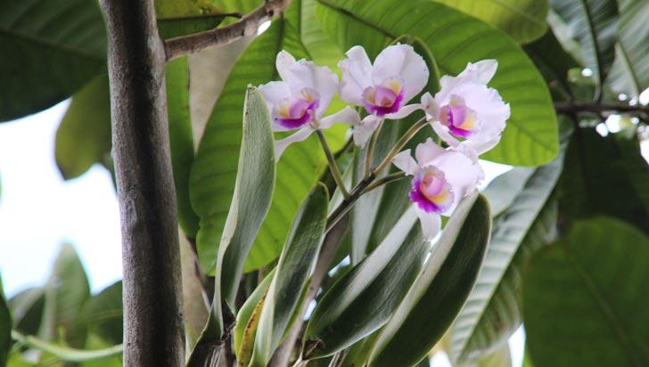 Las orquídeas engalanan el sendero Esperanza Mejía en el parque de la Vida