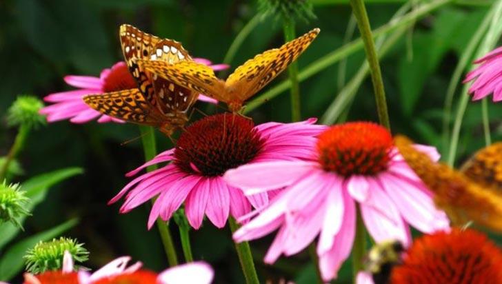 El efecto invernadero, culpable del aumento de flores en los bosques tropicales