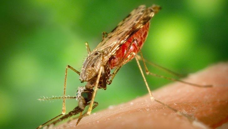 OPS alerta del aumento de la malaria en cinco países latinoamericanos