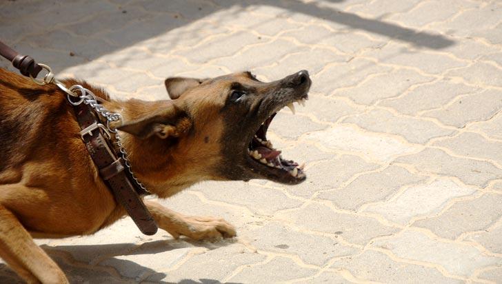 Los perros muerden a desconocidos y a personas emocionalmente inestables