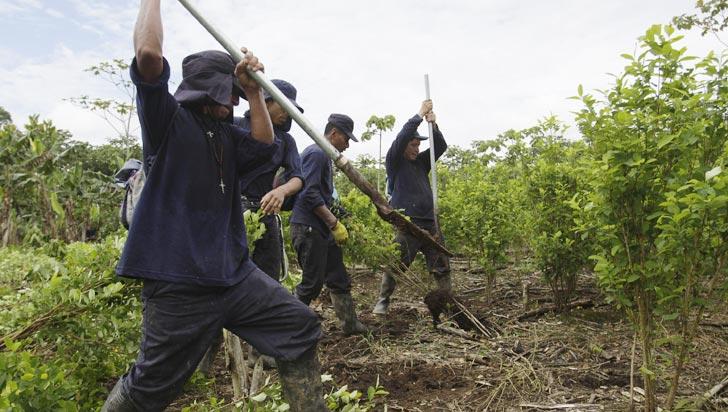 Grupo de campesinos mantiene retenidos a policías que erradicaban coca en Tumaco