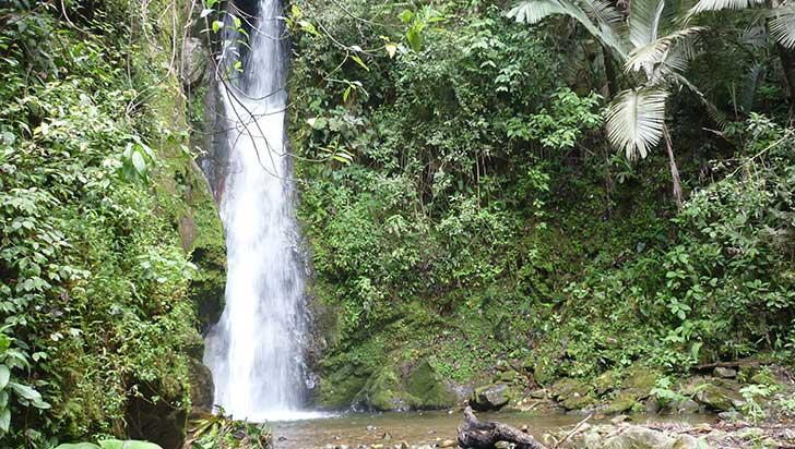 Quebradas de Salento, afectadas por monocultivos de eucalipto