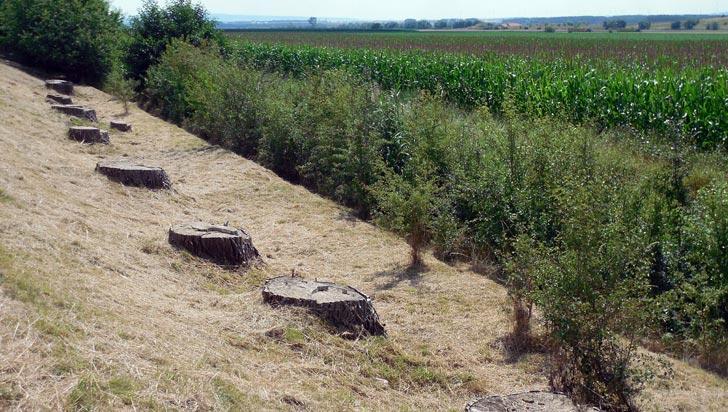 Consolidar control a deforestación, uno de los principales retos a nivel nacional