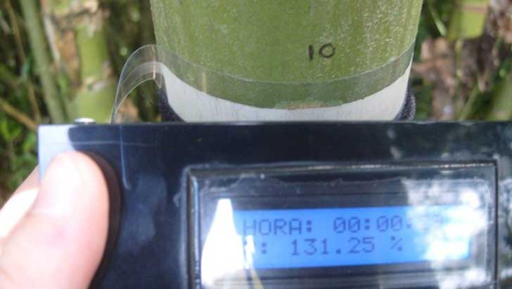 Dispositivo uniquindiano para medir humedad de vegetales recibió patente