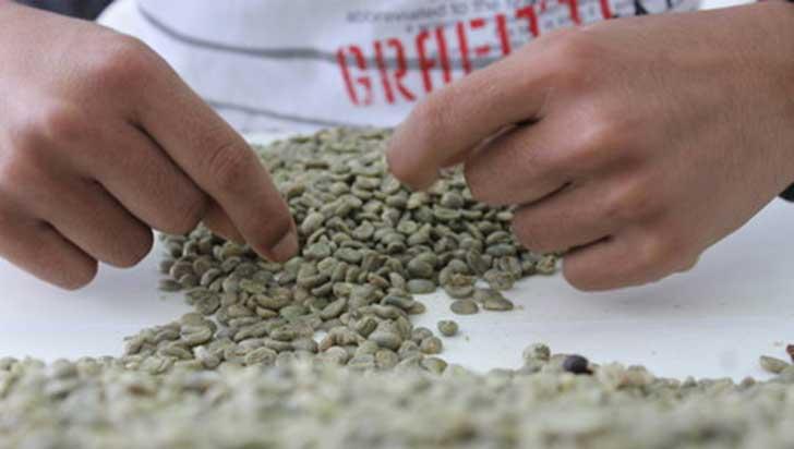"""""""Este año Quindío tendría mejores resultados en Concurso Nacional de Calidad de Café"""": Comité de Cafeteros"""