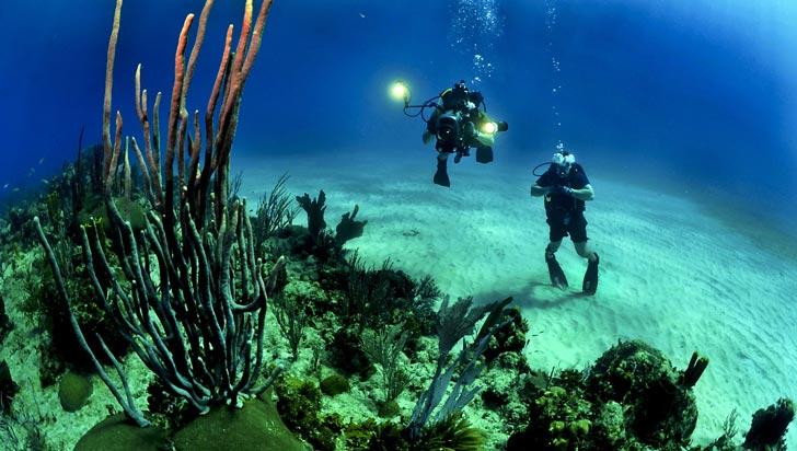 El cambio climático amenaza áreas de protección marina