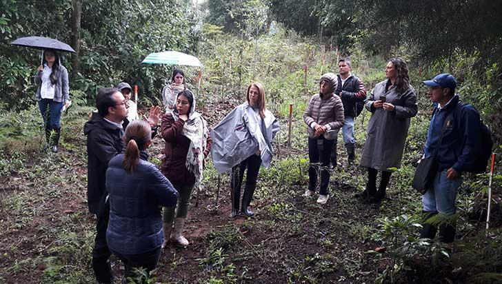 Constructores y comité de cafeteros reforestan 14,3 hectáreas en el Quindío