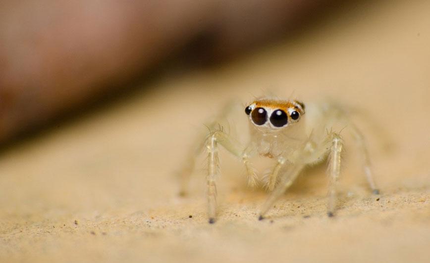 Por qué no debería matar a las arañas que viven en su casa