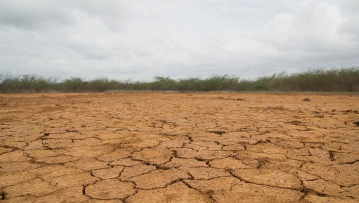 Según estudio, la mitad de la vida en la Tierra ya se extinguió desde la llegada de la civilización