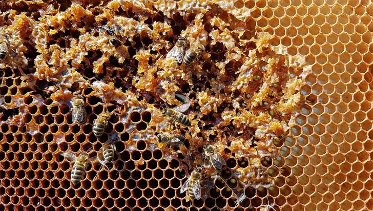 """""""El envenenamiento de abejas ha disminuido en el departamento"""": Apicultor"""