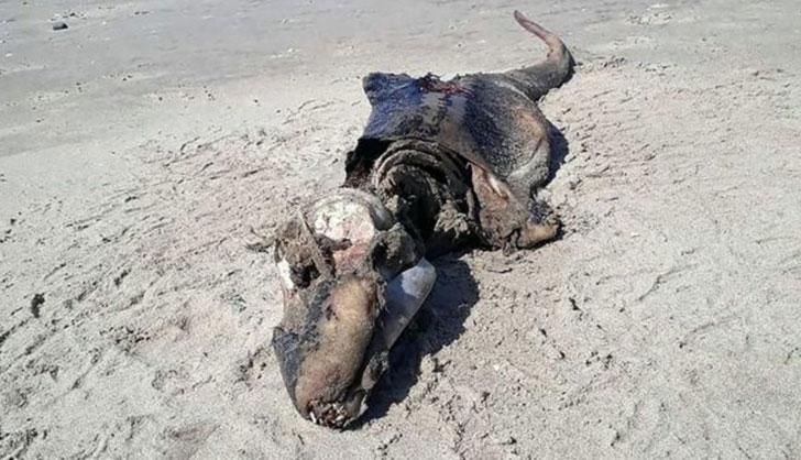 Extraña criatura encontrada en las costas del Reino Unido desconcierta a especialistas