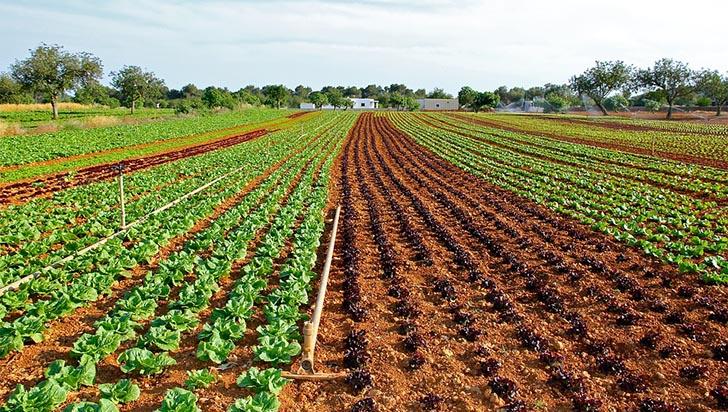 Cambio climático puede reducir drásticamente producción global de vegetales