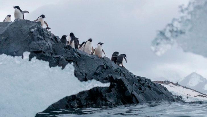 La contaminación por microplásticos llega a las áreas más remotas de la Antártida